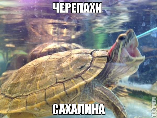 черепахи сахалина