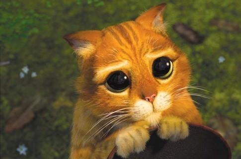 Глаза у кота в сапогах фото